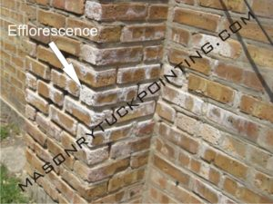 Efflorescence visible on bricks - Masonry and Tuckpointing Chicago